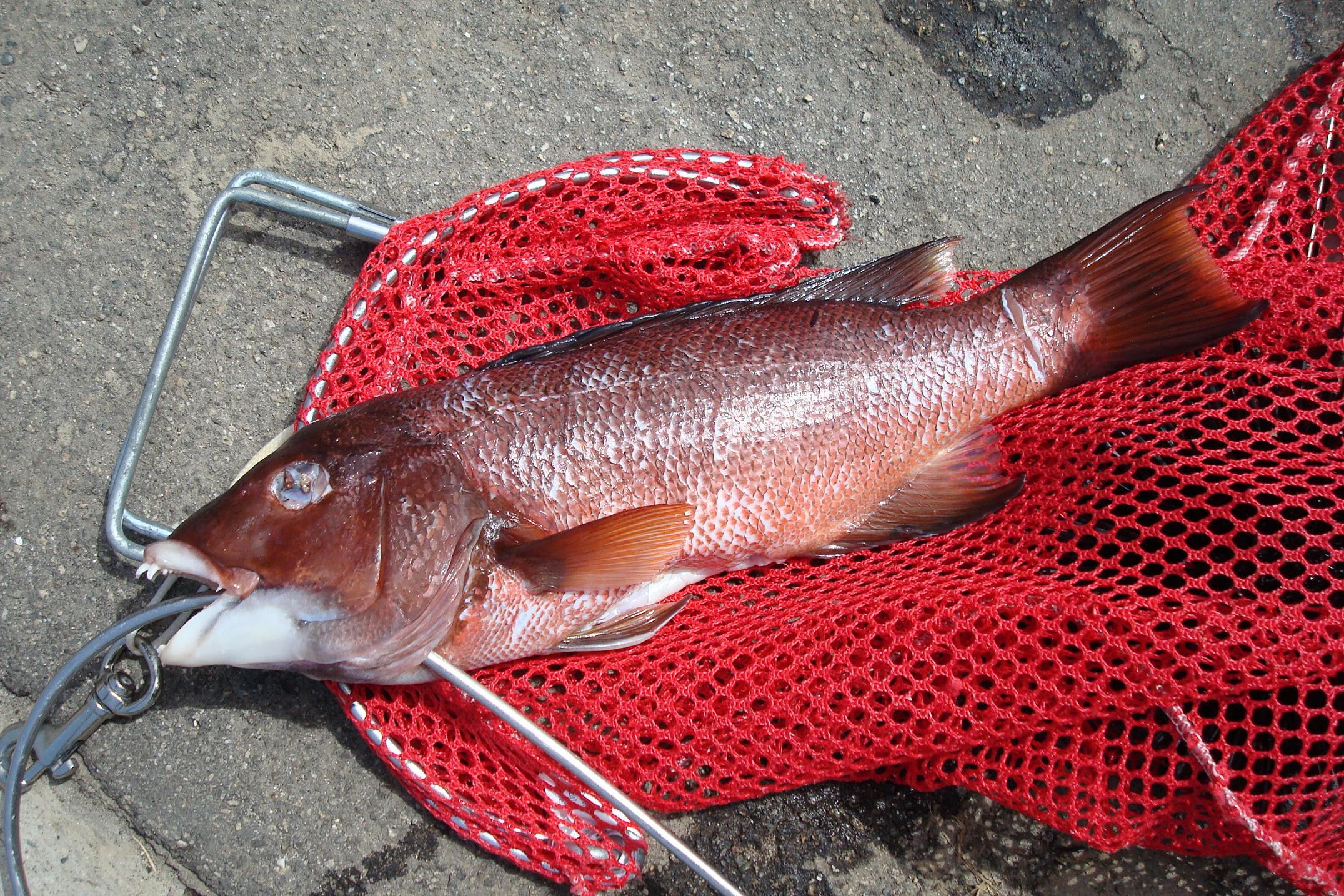 8月30日:サンコの獲物
